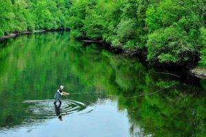 Contemplation du pêcheur à la mouche effectue un lancer parfait de sa soie dans un cadre naturel totalement vert.